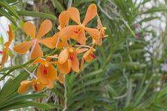 Орхидея Стоковые Фото