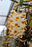 Орхидея Стоковые Изображения