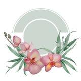 Орхидея иллюстрация вектора