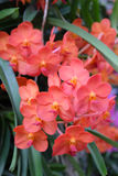 Орхидея Стоковое фото RF