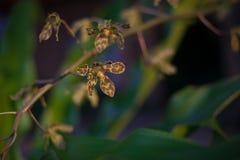 Орхидея Tropycal фото зеленая на запачканной предпосылке Одичалая природа Flores Горизонтальное изображение Стоковые Изображения