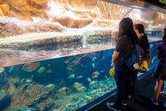ОСАКА, ЯПОНИЯ - 18-ОЕ ИЮЛЯ 2017: Неопознанные люди смотря эквадорский вид рыб originative от Эквадорца Стоковые Изображения
