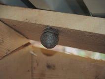 Оса строит насекомое сферически гнезда опасное стоковое фото