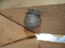Оса строит насекомое сферически гнезда опасное стоковое изображение rf