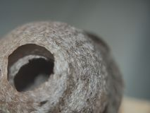 Оса строит насекомое сферически гнезда опасное стоковое фото rf