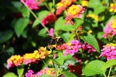 оса цветка Стоковое фото RF