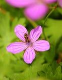 оса цветка Стоковое Фото