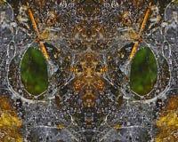 оса Стоковое Изображение RF