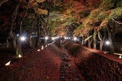 Осветите вверх на коридоре клена стоковые фотографии rf