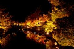 Осветите вверх покрашенных листьев Стоковые Изображения