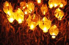 Светлая флора Стоковое Изображение