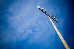 освещает стадион Стоковые Изображения