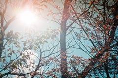 Освещать в природе Стоковое фото RF