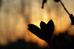 Освещать контржурным светом стоковое фото
