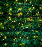 Освещение рождественской елки Стоковые Фотографии RF