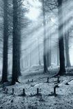 освещенная пуща стоковое изображение rf