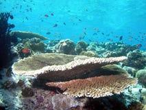 освещенное кораллом солнце рифа Стоковое Изображение