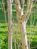 освещенные бортовые стволы дерева Стоковая Фотография