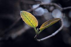 освещенные листья задней части Стоковая Фотография RF