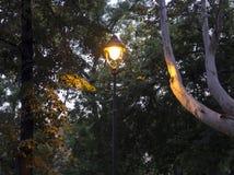 Освещенный винтажный фонарик в начале сумерек, осеннего пейзажа в парке на сумраке, ветвей плоского дерева и листьев стоковая фотография