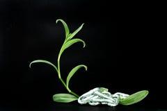 освобождать природу Стоковые Изображения