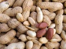 освобоженный арахис макроса Стоковые Фотографии RF