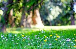 освобождаться солнечный Стоковые Фото