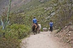 Осел в лесе на следе Inca к Machu Picchu Внушительный h стоковая фотография rf