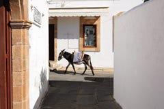 Осел единственные транспортные средствя на улицах Lindos, Греции стоковая фотография