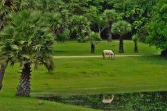 Осел есть траву стоковые изображения