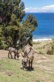 Осел перед деревьями и озером Дорога и прогулка на яхте к Isla de стоковые фото