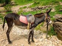 Осел с седловиной для прогулки в горах стоковые фотографии rf