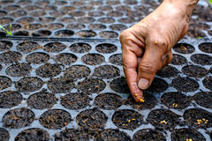 Осемените расти в заводе подноса дерево Стоковая Фотография RF