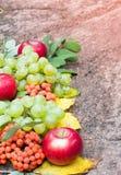 Осени жизнь все еще с плодоовощ на камне Стоковое Изображение