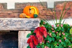 Осени жизнь все еще Стоковая Фотография