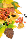 Осени жизнь все еще Стоковое Фото