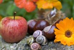Осени жизнь все еще Стоковое фото RF