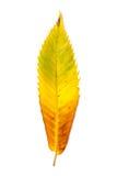 Осеннее изменение цвета в лист дерева Стоковые Изображения