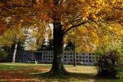 Осеннее кладбище стоковое изображение