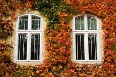 осеннее листво Стоковое Изображение RF