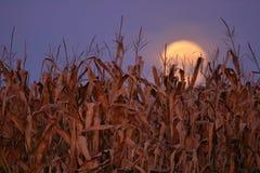 Осеннее полнолуние Стоковое фото RF