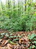 Осенние высушенные листья и зеленые растения Стоковые Фото