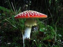 осенние грибы Стоковое фото RF