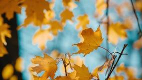 Осенние деревья на дне осени акции видеоматериалы