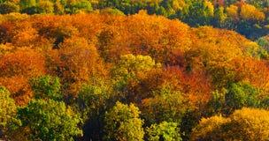 Осенние золотые деревья Стоковые Изображения RF
