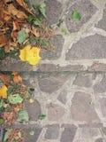 осенние листья Стоковые Фото