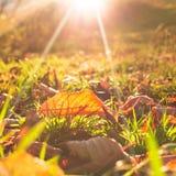 Осенние лист Стоковые Изображения