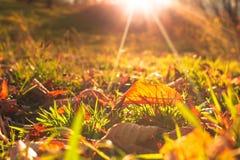Осенние лист Стоковые Фото