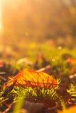 Осенние лист Стоковое Изображение