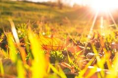 Осенние лист Стоковое фото RF